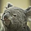 オーストラリアドル外貨預金の定番「ヒロセ通商」が更に9,000円もらえるキャンペーン中!