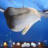 《11.3.11》被災地東北、18次<巡訪>/ ㉘7日目(2)山田町・船越半島「鯨と海の科学館」  今回のテーマ[つぎのステップにむけて]