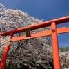 【絶景】和歌山県橋本市にある『丸高稲荷神社』へ行って桜のお花見をしてきた!