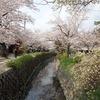 京都)哲学の道→野村碧雲荘横のしだれ桜→蹴上インクラインの桜