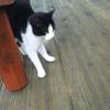 孤立猫おちょび
