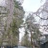 春キタ━━━━ヽ(゚∀゚ )ノ━━━━!!!!
