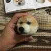 【200日目】犬ぽんぽんの動画作者ご本人の製作過程
