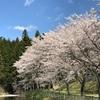 まだまだ桜を追いかけて。