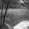 10月のフィルム写真ーNikkor-S Auto  5.8cm f1.4