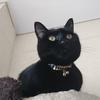 今日の黒猫モモ&白黒猫ナナの動画ー800