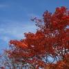 甲府から車で2時間。白樺リゾートは少し早い秋を感じられる素敵な場所でした