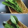 ホウレンソウ3 /ナデシコ目の植物たち4-3 日本のホウレンソウ 江戸期に日本へ伝播したのはぎざぎざ葉っぱの東洋種.丸葉の西洋種との交雑種が主流となって,現在はF1(一代交配種)全盛.日本の主要野菜となったホウレンソウは,野菜摂取量ランキングで第6位.「野菜摂取者ランキング」でも健闘して第9位につけています.
