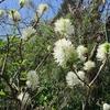 「まつこの庭」の春の花木と山野草