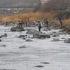 矢作川渓流解禁 朝一釣行してきました!