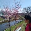 2017年  新境川のお花見