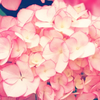 Healing message * 13 あなたの蜜を解き放つ 開花メッセージ - 潤いの6月