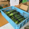 夏野菜真っ盛り(農大70,73,74日目:栽培実習)
