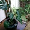 ようこそ!観葉植物さん!