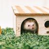 住宅ローンは変動金利と固定金利、どっちがいいの?