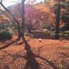 終了寸前の紅葉を見に京都へ日帰り旅行してきた