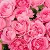 かなりピンクなは・な・し♡