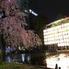 【上野公園】枝垂れ桜が見頃