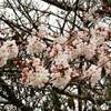 花冷えでも春の花は元気