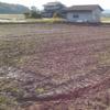 不耕起予定だった田んぼは、ガスが発生するかな?