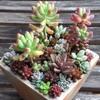 多肉植物の寄せ植えを作りました!