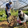 第2回 畑遊びde自然体ワークショップ 〜トマト狩り&ゴボウ掘り〜 開催案内