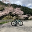 県道277号線、滝ヶ原峠から日光東照宮へ向けて桜ライドを満喫