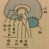 脳の幹は働き者~『ニューロ』キャンペーン~