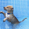 子犬ちゃん初めてのプール