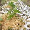 雪の降った日