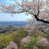 埼玉県・鐘撞堂山 [20/04/03] ~サクラ舞う山頂へ~