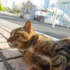 4月後半の #ねこ #cat #猫 その2