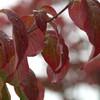 福井城址周辺の雨に濡れる紅葉