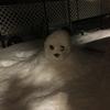 魔の家中インフルエンザ&大雪到来。