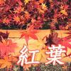 京都 紅葉100シリーズ ただいま見頃紅葉の名所