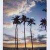 チェキで振り返る、ハワイ旅🎞💭