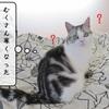 猫雑記 ~すずめのおせっかい~
