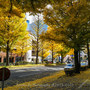 【LeicaQ2・仙台】愛宕上杉通りの銀杏並木をお写ん歩   November  2020