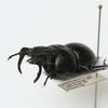 甲虫標本、追加しました