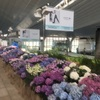 【羽田空港】紫陽花が美しい&事前オーダーも失敗