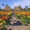 「いちめんポピーのお花畑!」房総フラワーラインの旅 4館山ファミリーパーク