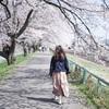 一目千本桜沿いを歩いてみた