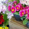 東海フラワーショウの花と光のコントロール