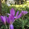 白と紫の競演