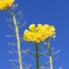 ここ数日、道端で見かけた花を撮影した