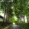 東福寺でULTRON 28mm F2 VM を試す!