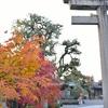 西院春日神社の紅葉と千両と福種。