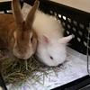【ウサギ】認定動物看護師が語る、「ウサギを飛行機に乗せる」ために必要な4つのこと【後編】