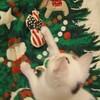 我家のクリスマス