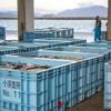 2020年3月16日 小浜漁港 お魚情報